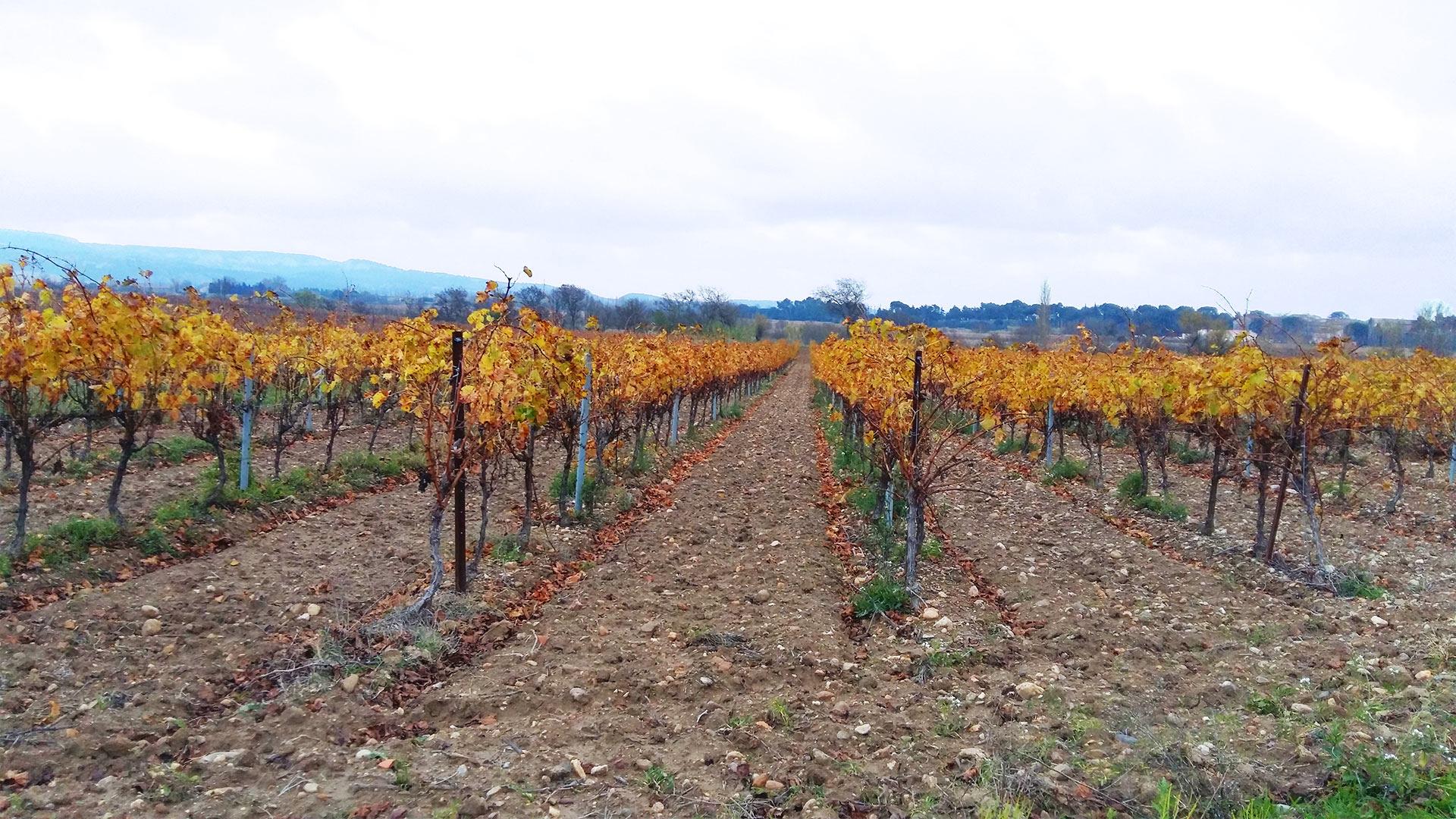 Ciam mat riel agricole viticole espaces verts btp for Espace vert perpignan